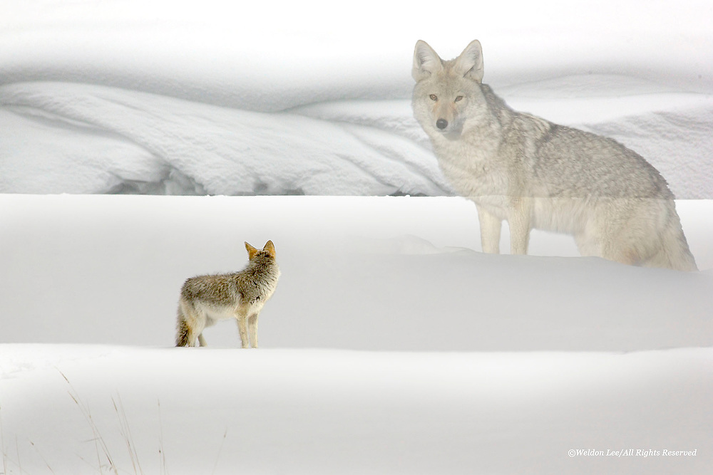 &quot;Follow Me&quot;<br />