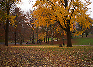 Autumn colors at The Sailboat Pond in Central Park, New York City
