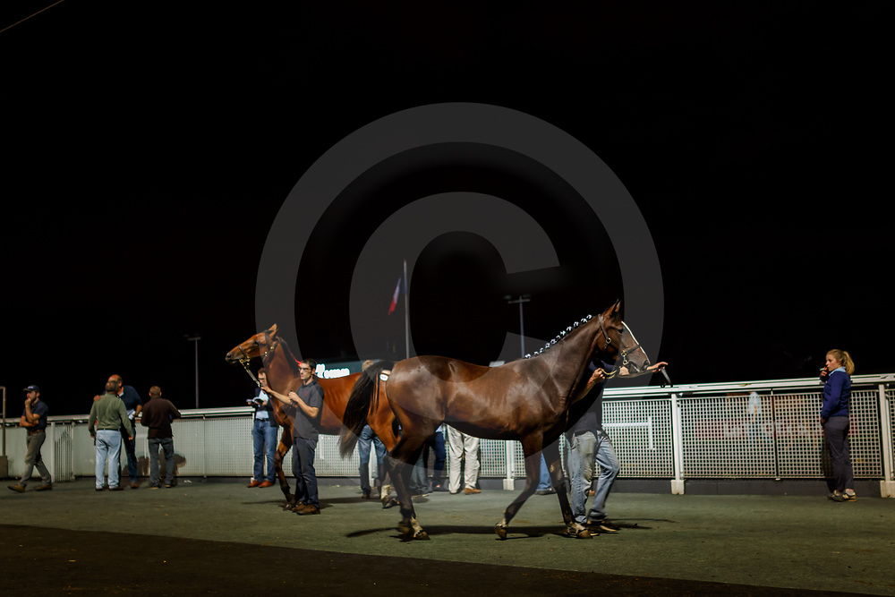 Vente de yearlings Osarus trot, Hippodrome de Paris Vincennes, 24/08/2017, photo: Zuzanna Lupa