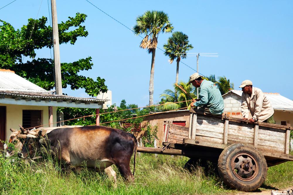 Oxen and cart near Las Martinas, Pinar del Rio, Cuba.