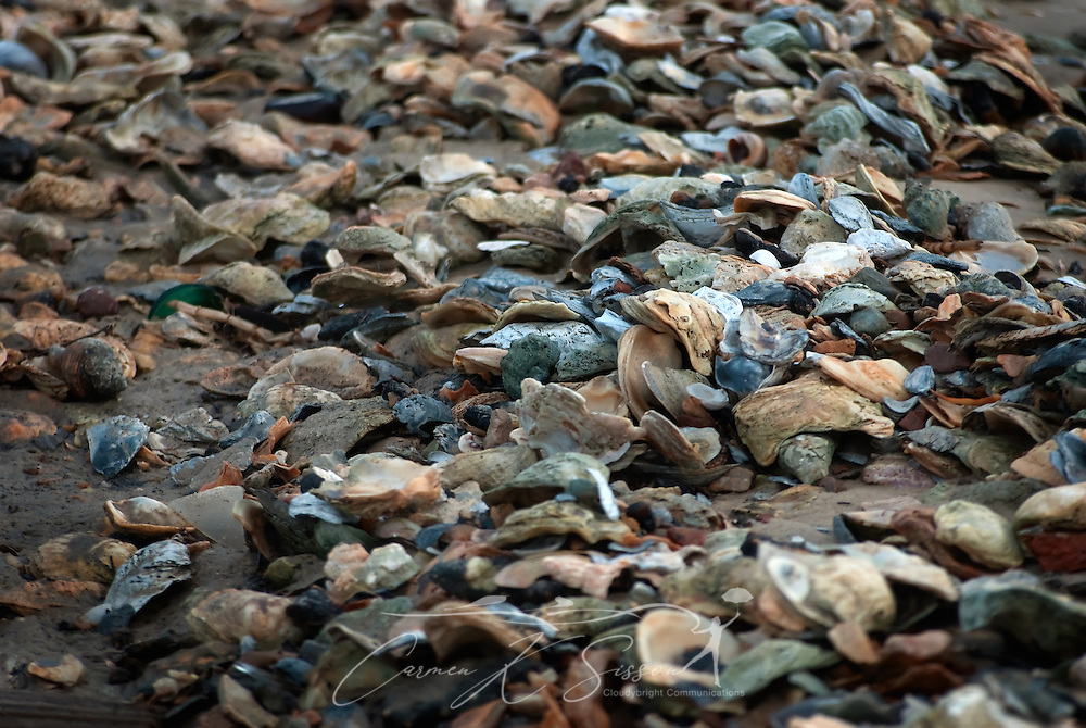 Oyster shells cover the beach in Bayou La Batre, Ala. (Photo by Carmen K. Sisson/Cloudybright)