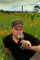 Paul Mason, the winemaker sits surrounded by the wildflowers growing between the rows of vines and tastes a glass of wine, Martinborough Vineyard, Martinborough, South Wairapa region, North Island, New Zealand