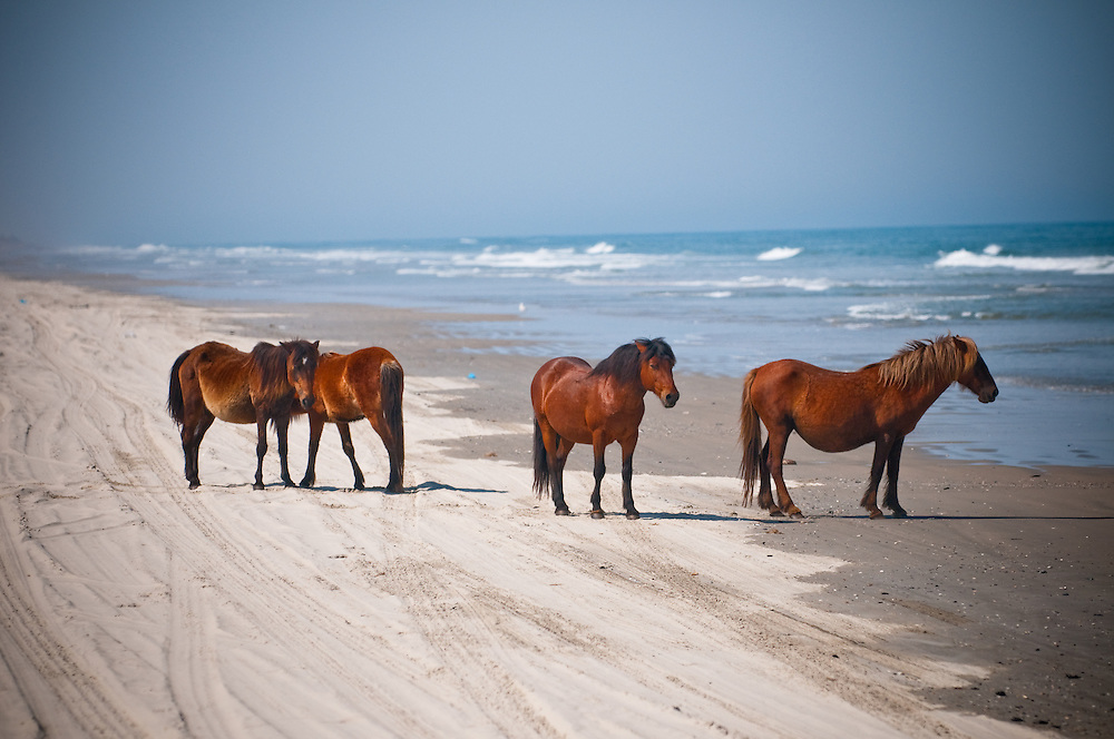 Horses of Corolla