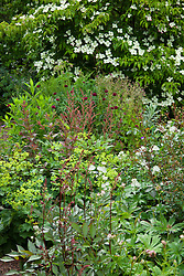 Corner of a summer border at Glebe Cottage. Cornus 'Norman Hadden', Astilbe 'Fanal', Knautia macedonica, Astrantia major, Rosa 'Little White Pet', Alchemilla mollis, Fuchsia magellanica 'Versicolor' and Athyrium filix-femina