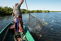 Traditional fishing with fyke net, Danube Delta fisherman Florin Moisa shaking the net free from weed, Danube Delta, Romania