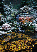 Japanese Gardens in early winter snowstorm