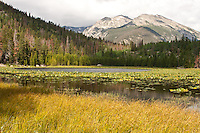 Pond lilies in Cub Lake  below 12,928 ft. Stones Peak.  Rocky Mountain National Park, Colorado