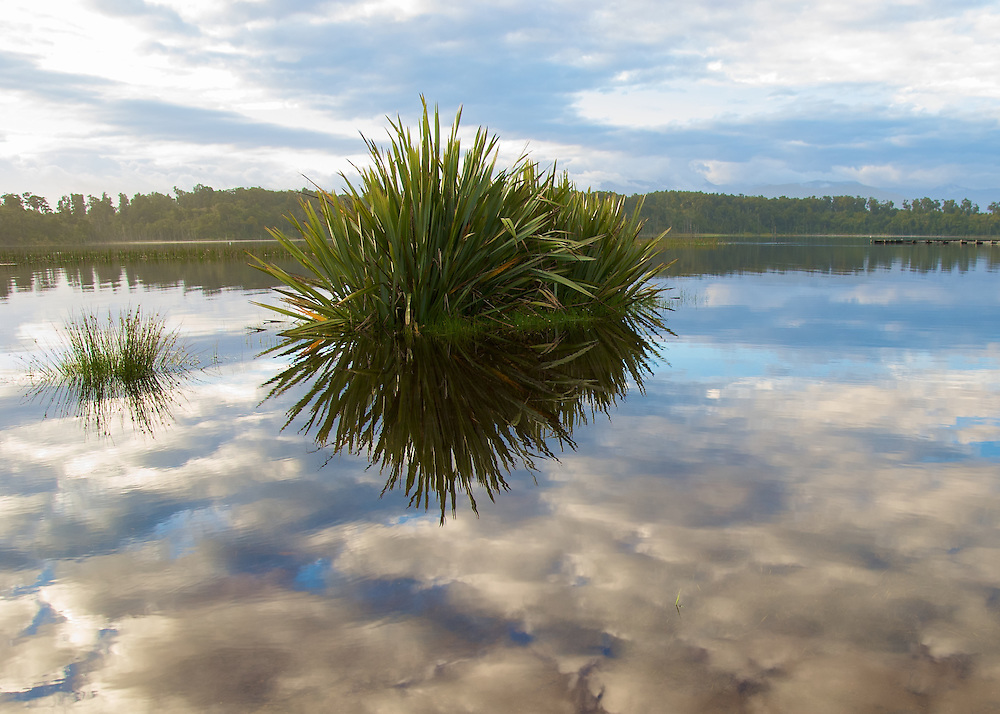 A clump of grass is reflected in a lake with clouds in a blue sky above.
