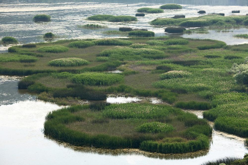 Islands of reeds (Phragmites australis) in the Svitavsko Lake. Hutovo Blato Nature Park. Bosnia-Herzegovina. May 2009.<br /> Elio della Ferrera / Wild Wonders of Europe