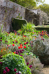 Tulips in a border at Parham House and Garden. Bronze fennel, Imperial fritillary, Tulipa 'Ronaldo' and 'World Favourite'