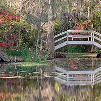 Small white bridge amongst azaleas and wisteria reflected in the pond at Magnolia Plantation, near Charleston, South Carolina