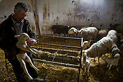 Sheepherder Miguel Martinez inspects a lamb at his farm in Zarzuela de Jadraque, Spain. (Miguel Angel Martinez Cerrada  is featured in the book What I Eat: Around the World in 80 Diets.)