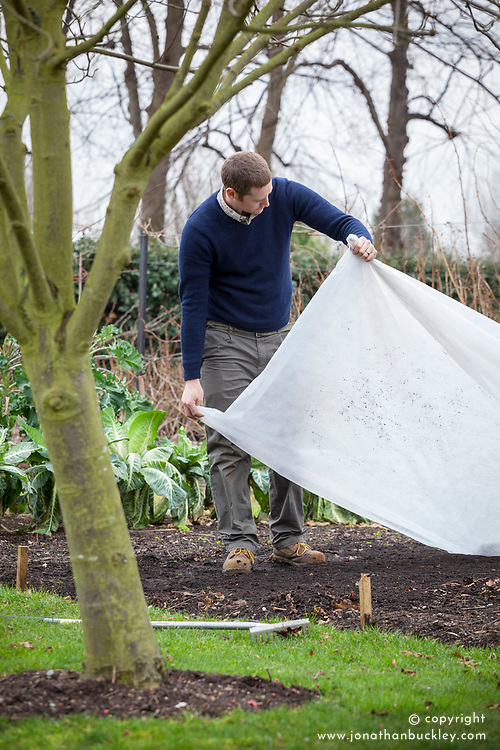 Covering a seedbed with horticultural fleece to warm up the earth