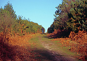 A08JT9 Track in autumn Suffolk Sandlings Rendlesham England