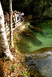 Florida: Endangered species, manatees, Homosassa Springs Park.  Photo: flcitr103.Photo copyright Lee Foster, 510/549-2202, lee@fostertravel.com, www.fostertravel.com