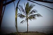 A palm about to disappear into the Meghna river..This area in the south of Bangladesh has been called ground zero of climate-change due to heavy river and ocean erosion. The lowlying area is also hugely affected by cyclones and rising sea-levels...By the Mouth of Ganges, at the Bay of Bengal is the Island of Bhola. This home of about two million people is considered to be ground zero of climate change. Half the island has disappeared in the past 40 years, and according to scientists the pace is not going to slow down. People pack up and leave as the water get closer. Some to a nearby embankment, while those with enough money move further inland, but for most life move on until the inevitable. It's always about survival for the people in one of the worlds poorest countries...Photo by: Eivind H. Natvig/MOMENT