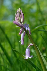 Texel, Bloemen, Flowers