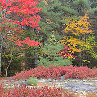 Fall foliage time in Acadia National Park, near Bar Harbor, Maine.