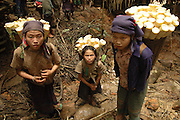 Young Hmong girls return with bamboo shoots for food, near Vang Vieng, Laos, June 28, 2006.  The women and children hunt all day in the forest for wild roots and berries while the men do their best to protect them.  They usually spend about 18 hours per day just trying to find food and often go hungry.  They say the Lao army shoots at them so often they are unable to stay in one place to farm vegetables or livestock.  Many suffer digestive problems, malnutrition and starvation...**EXCLUSIVE, no tabloids without permission**  .Pictured are a group of Hmong people who report an attack against them April 6, 2006 by Lao and Vietnamese military forces.  26 people perished, 5 were injured, and 5 babies died shortly after because their dead mothers could not breast-feed them.  Only one adult male was killed, the other 25 victims were women and children (17 children).  The Lao Spokesman for the Ministry of Foreign Affairs says this is a fabrication, an investigation has been completed, and there was no attack.  The Hmong group says no officials have interviewed witnesses or visited the crime scene, a point the Lao Spokesman did not deny.  ..The Hmong people pictured have hidden in remote mountains of Laos for more than 30 years, afraid to come out.  At least 12,000 are said to exist, with little food, scavenging in the jungle. Most have not seen the modern world.  Since 1975, under the communists, thousands of reports evidence the Hmong have suffered frequent persecution, torture, mass executions, imprisonment, and possible chemical weapons attacks.  Reports of these atrocities continue to this day.  The Lao Government generally denies the jungle people exist or that any of this is happening.  The Hmong group leader, Blia Shoua Her, says they are not part of the Hmong resistance and want peace.  He claims they are just civilians defending their families, hoping to surrender to the UN..