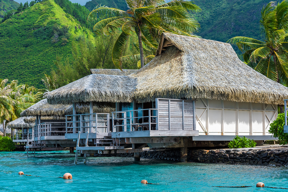Picturesque thatched roof houses sit over a beautiful blue lagoon in Moorea  island in the South Pacific.