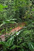 Costa Rica - Hanging Bridges Rain Forest.