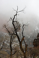 Naked trees are silhouetted against a cloud covered sky, Zion National Park