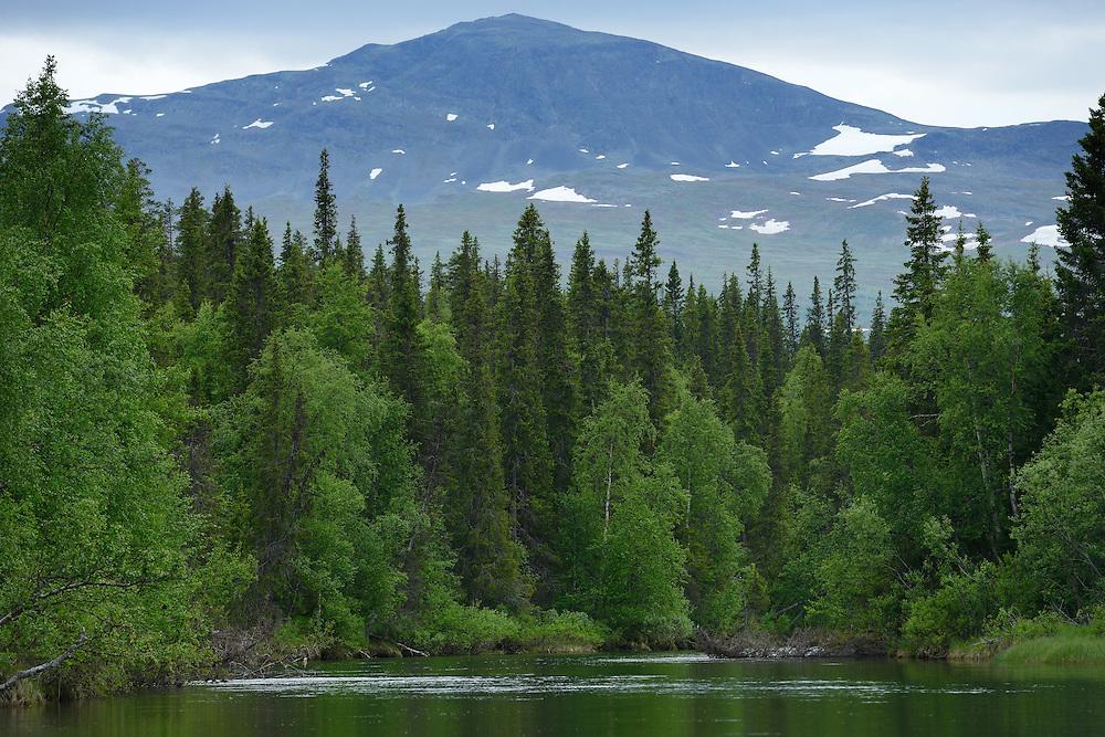 Kvikkjokk river delta, in the Laponia UNESCO World Heritage Site, Greater Laponia rewilding area, Lapland, Norrbotten, Sweden