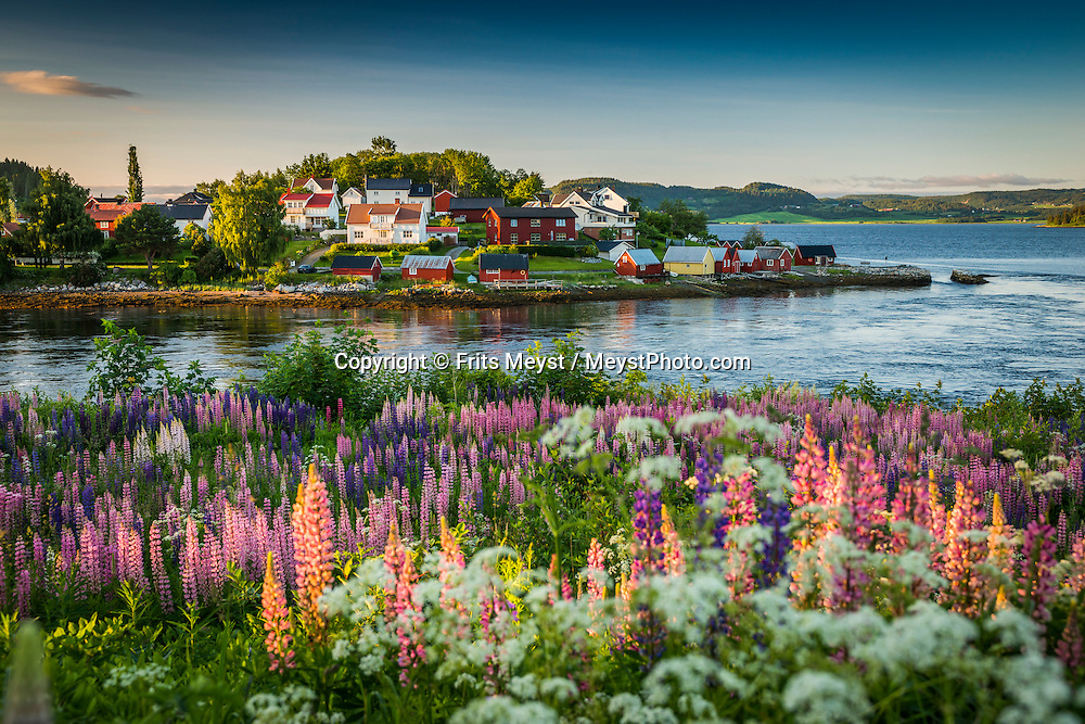 Straumen, Inderoy, Trondelag, Norway, July 2015. The village of Straumen. Inderøy island is known for it's abundant agriculture and farms along the Golden Road, that sell their fresh produce directly to the public. Trøndelag lies at the heart of Norway's identity. The rolling hills of the interior with its traditional ox-blood coloured farm houses grow a wealth of produce. In the west the coastline is sculpted by a maze of fjords and islands home to small fishing communities. Photo by Frits Meyst / MeystPhoto.com