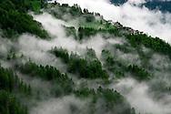 La foret sous le brouillard de Suens dans le val d'Herens en Valais dans les Alpes Suisse, le 19 mars 2010. he forest in the fog Suen in the Val d'Herens in.Valais Alps in Switzerland, March 19, 2010. (PHOTO-GENIC.CH/ OLIVIER MAIRE)