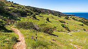 Pelican Bay trail, Santa Cruz Island, Channel Islands National Park, California USA