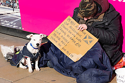 Homeless man with dog on Princes Street in Edinburgh, Scotland, Uk