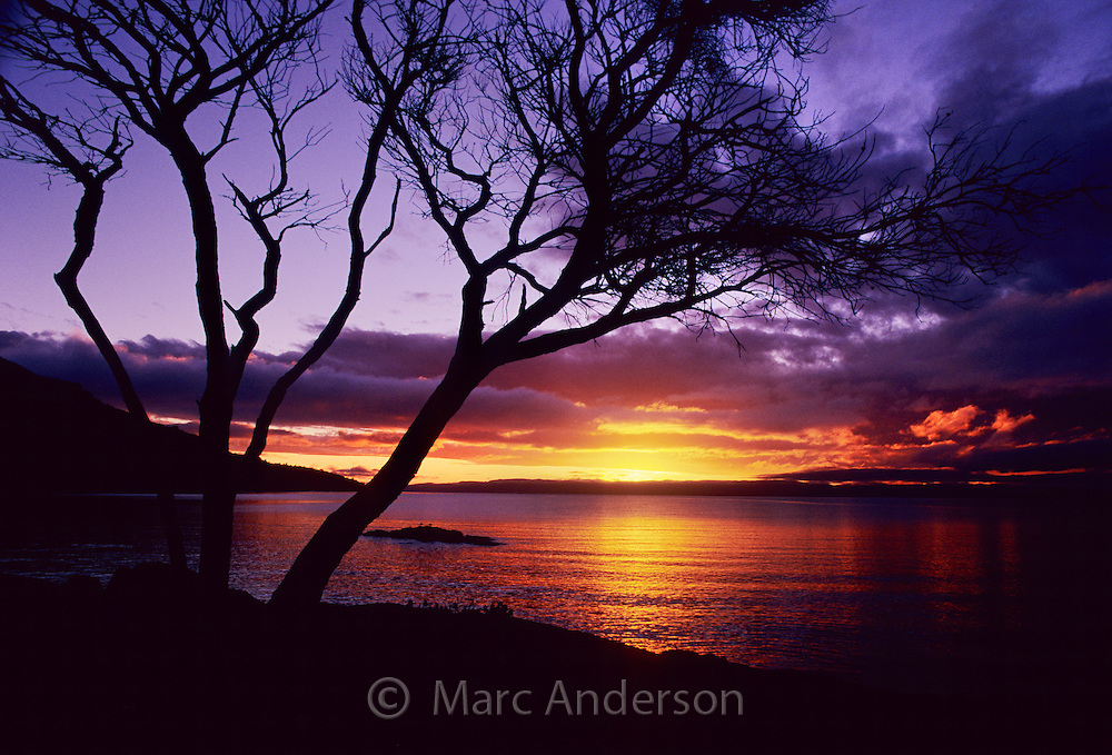 Tree silhouette & sunset, Honeymoon Bay, Freycinet Peninsula, Tasmania.