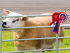 Agricultural Show, Haddington,  29 June 2019