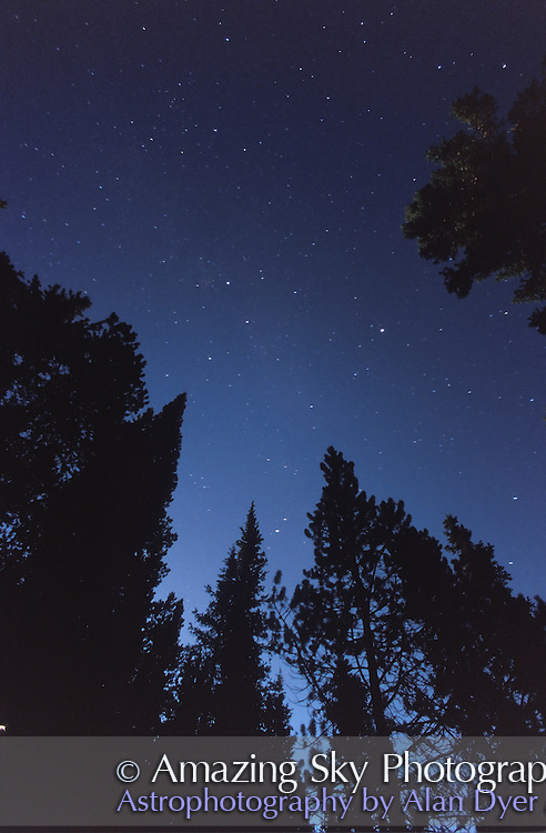 Summer Triangle amid trees, Banff National Park, Alberta, Canada (Waterfowl Lakes Campground) with Full Moon lighting sky<br /> <br /> 15mm  f/3.5 lens<br /> Ektachrome 200 slide film pushed 1 stop -- slightly different color balance than #2<br /> <br /> 60 second exposure<br /> August 1998