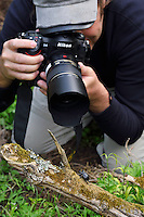 Photographer Magnus Lundgren photographing a rhinoceros beetle, Tangjiahe National Nature Reserve, NNR, Qingchuan County, Sichuan province, China