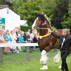 Great Yorkshire Show 2015 Shires