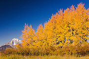 USA, Grand Teton National Park (WY)<br /> View of Mount Moran (12605 ft/3842 mt) and Fall colors