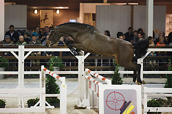 091 - Catch The Dark Z<br /> Hengstenkeuring BWP - Azelhof - Koningshooikt 2015<br /> ©  Dirk Caremans