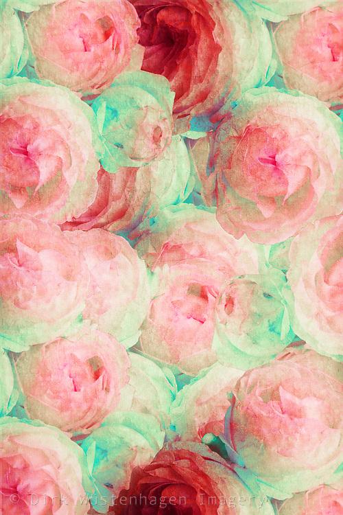 Digital manipulierte Aufnahme eines Strauß Rosen. Deutschland, Wuppertal