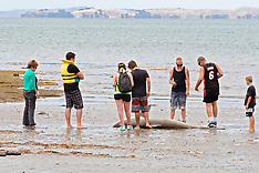 Auckland - Shark found at Browns Bay Beach