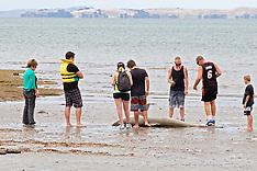 Auckland - Shark found at Browns Bay Beach