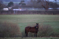 Horses out in the fields near the site of Bank House, Cholmondeley, Malpas.