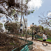 SEPTEMBER 29 - GUAYAMA, PUERTO RICO - <br /> Trees in the square of the southern town of Guayama knocked down following  the aftermath of the path of Hurricane Maria.<br /> (Photo by Angel Valentin for NPR)