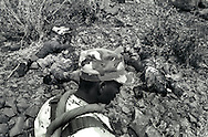 An Eritrean soldier passes some dead Ethiopian soldiers, near Tsorana, Eritrea.
