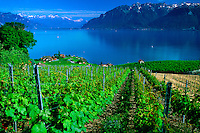 Vineyards along Lake Geneva, Chexbres, Switzerland