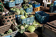 various cabbages at a vegetables farm