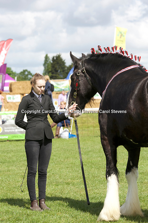 Notts County Show 2017<br /> Heavy Horses - Young Handlers