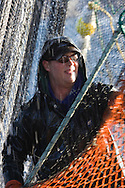 Commercial fisherman Jamin Morris stacks leadline while bringing the seine onboard F/V Infinite Glory during the 2007 Sitka Herring Sac Roe fishery.