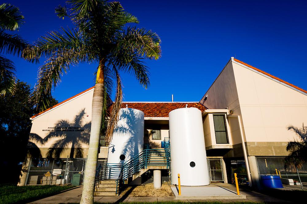 SARASOTA, FL -- August 19, 2016 -- Pritzker Marine Biology at New College of Florida. (PHOTO / New College of Florida, Chip Litherland)