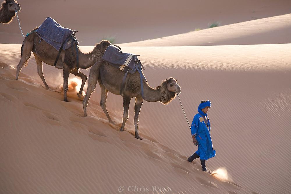 Berber leading camel train, Merzouga, Sahara Desert, Morocco